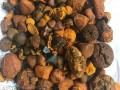 quality-cattle-gallstones-small-0