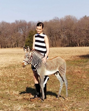 outstanding-zebras-for-sale-big-0